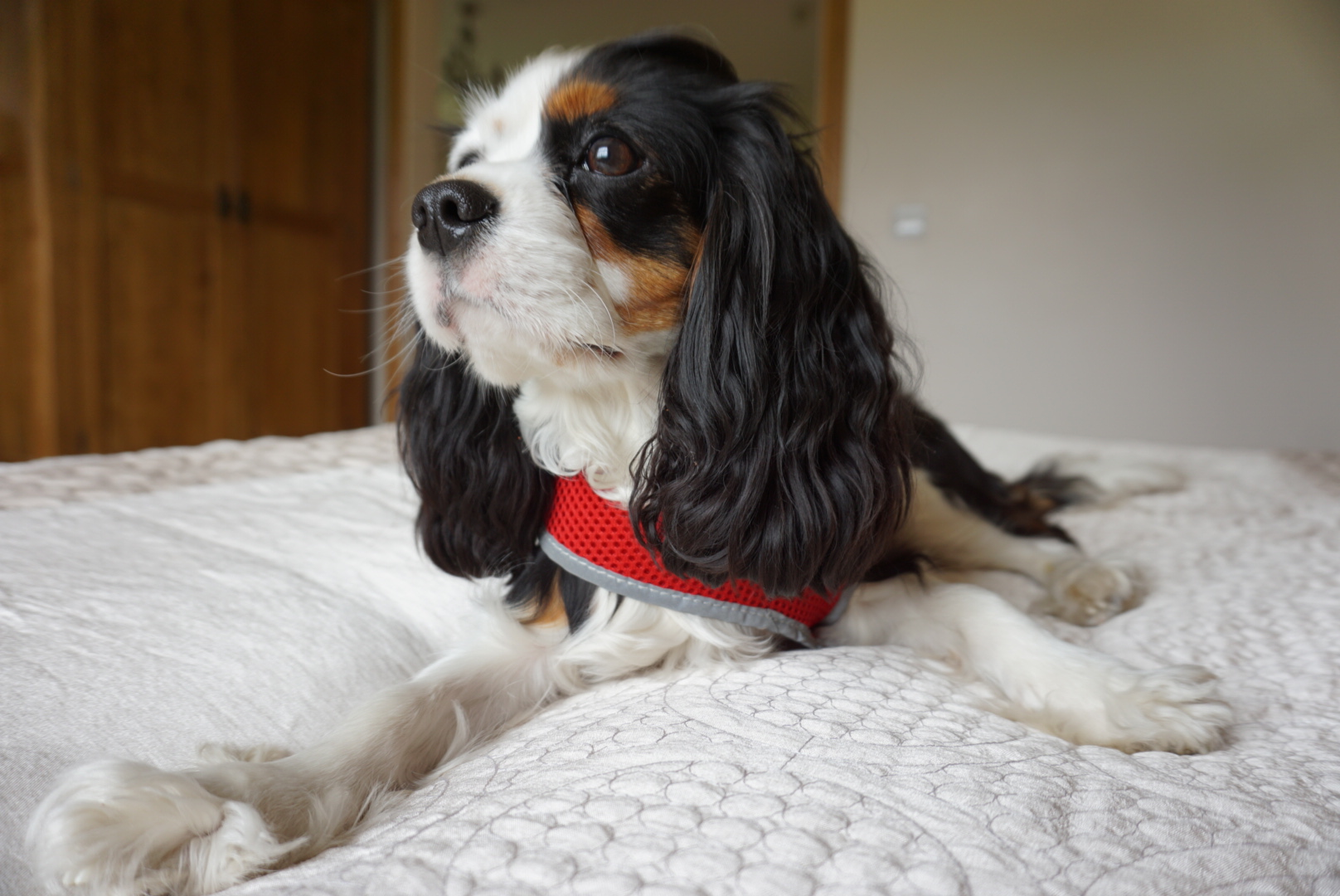 A Whitby Weekend Pooch-Friendly, Ox Pasture Hall Country Hotel